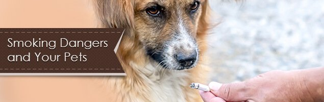 Can Cigarette Smoke Cause Cancer In Dogs