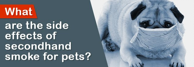 What are the side effects of secondhand smoke for pets?