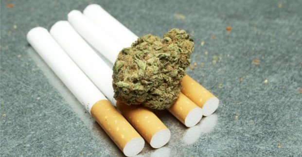 Marijuana and Tobacco Cigarettes