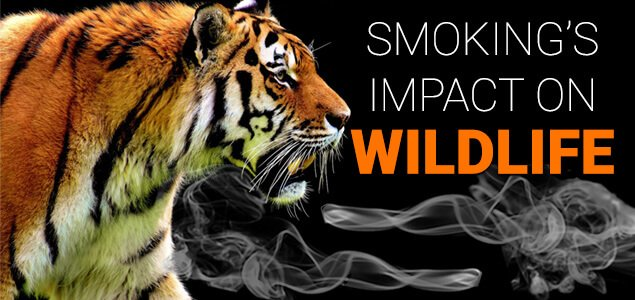 Smoking's Impact on Wildlife