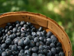 blueberries-e-juice