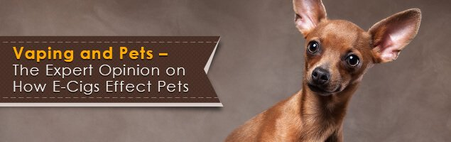 Vaping and Pets - The Expert Opinion on How E-Cigs Effect Pets