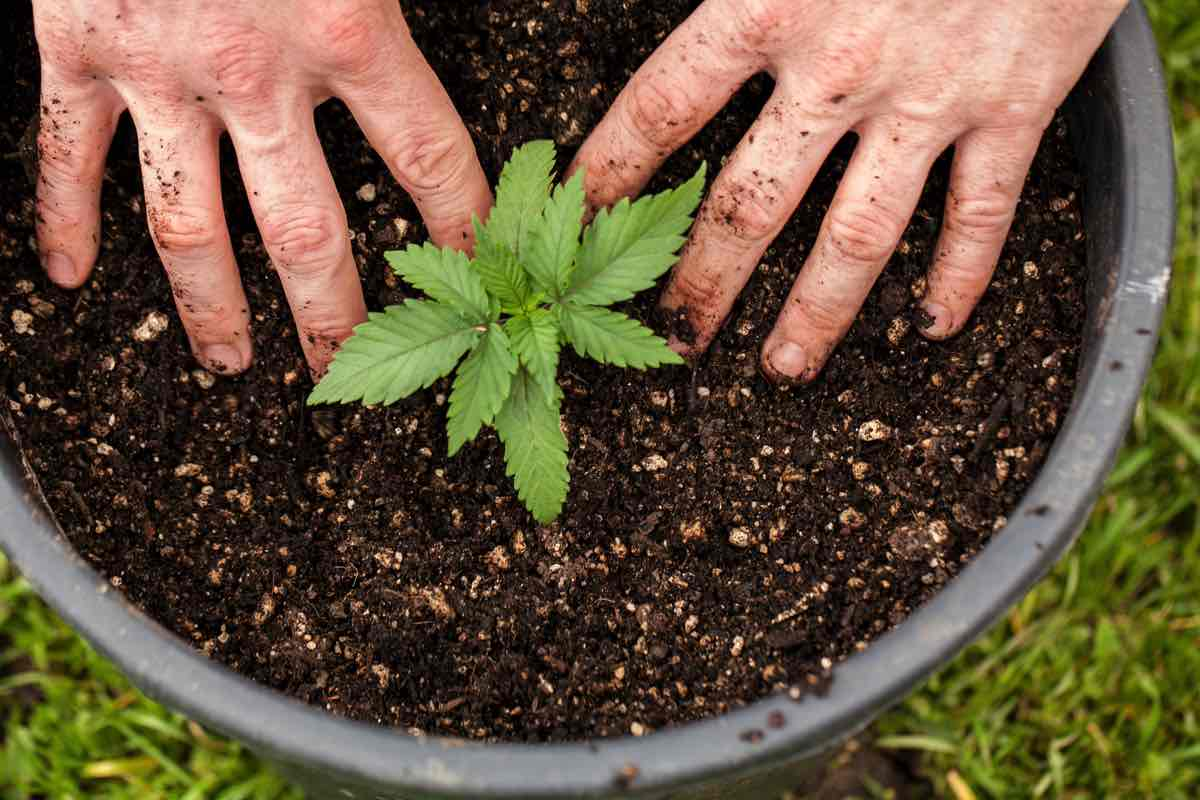 marijuana at home