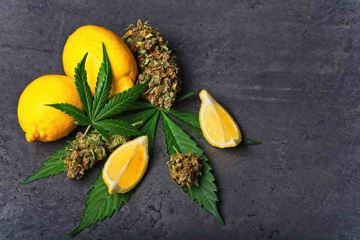 Cannabis buds / nugs and leaves with sliced lemon
